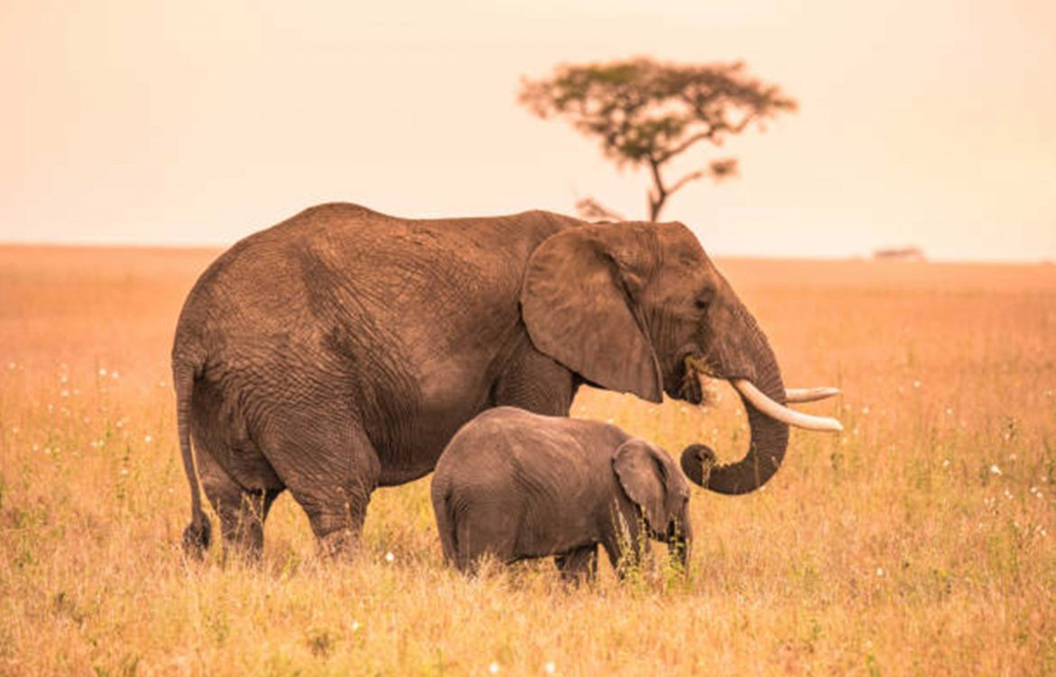 Tanzania Tours and Safaris Packages
