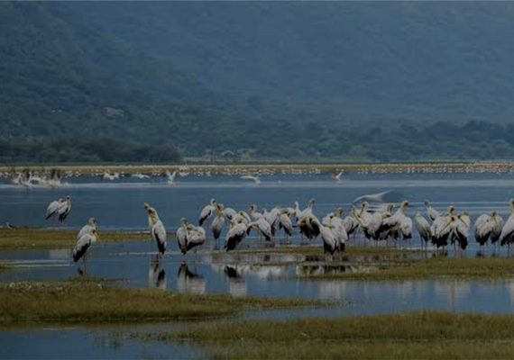 Tanzania Tours and Safaris, Lake Manyara National Park