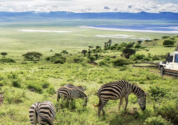 Tanzania Tours and safaris