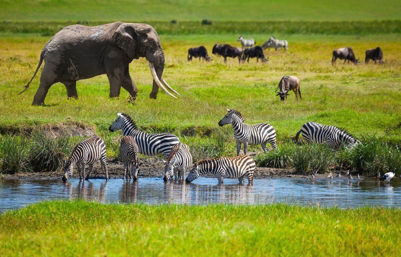 Tanzania Tours and safaris